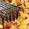 2015 Fall Leaf Collection Program
