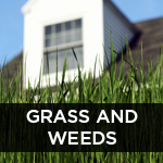 grass and weeds